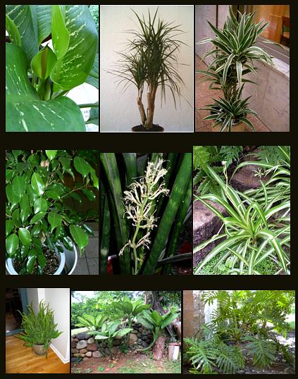plantas-2f